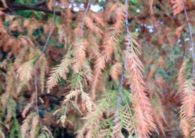 alberi spoglianti rieti